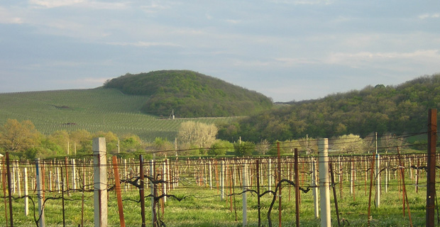 Chateau Le Grand Vostock Vineyards